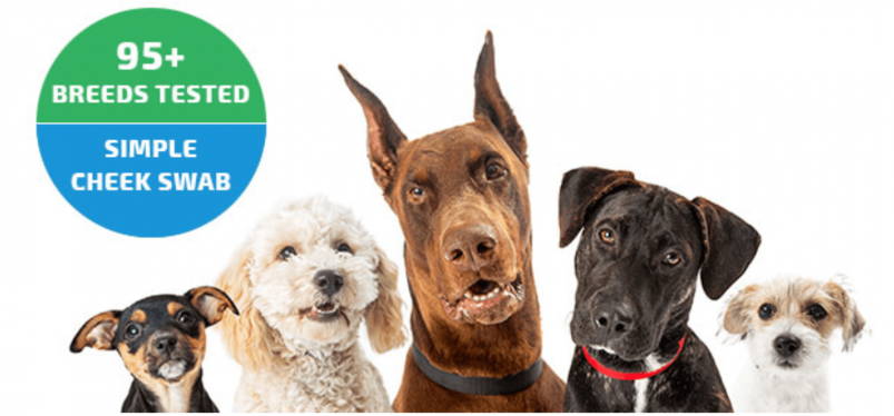 """EasyDNA Dog Testing Ad Banner That Says """"95+ Breeds"""" and """"Simple Cheek Swab"""""""