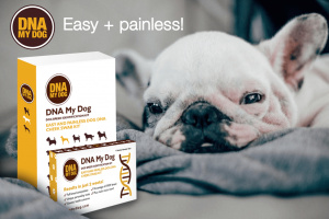 What is next for DNA My Dog in the near future?