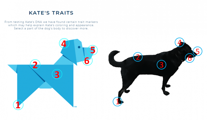 Wisdom Panel Traits Report example, and comparison to the real dog