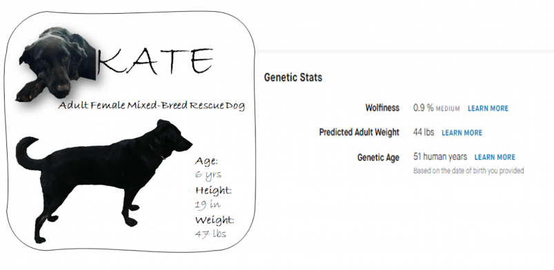 Embark Dog DNA Test Genetic Statistics Results