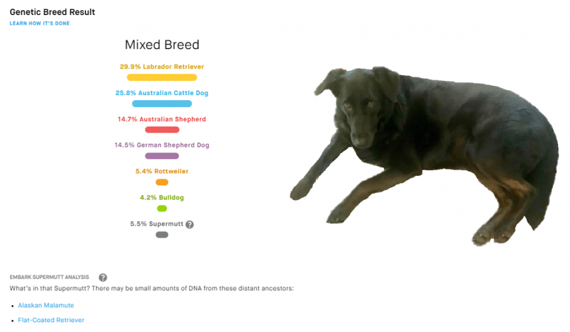 Embark's dog breed DNA test results