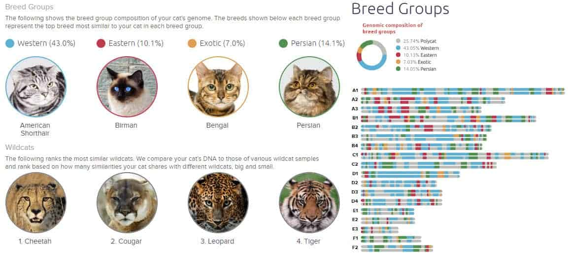 basepaws breed profile