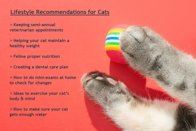 Lifestyle recommendations for cats
