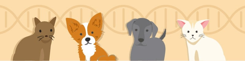 Best At-Home Pet DNA Tests for 2021