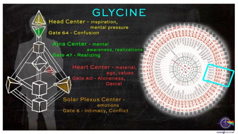 Glycine in human design