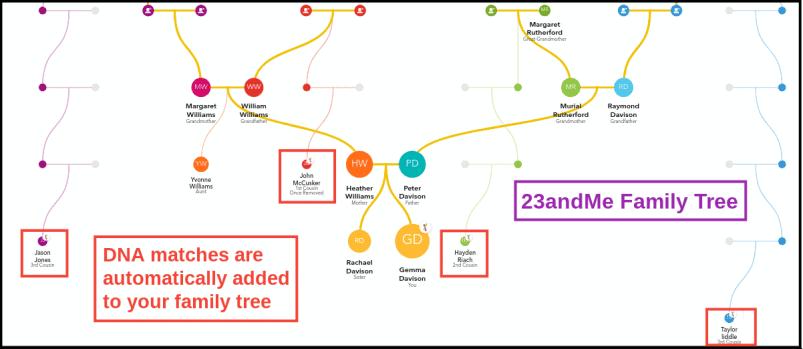 23andMe Family Tree Builder