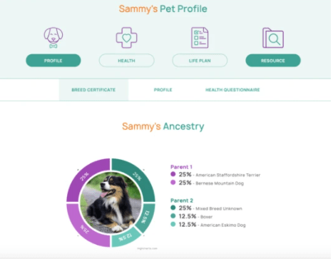 Orivet Identifies Pet Breed Type